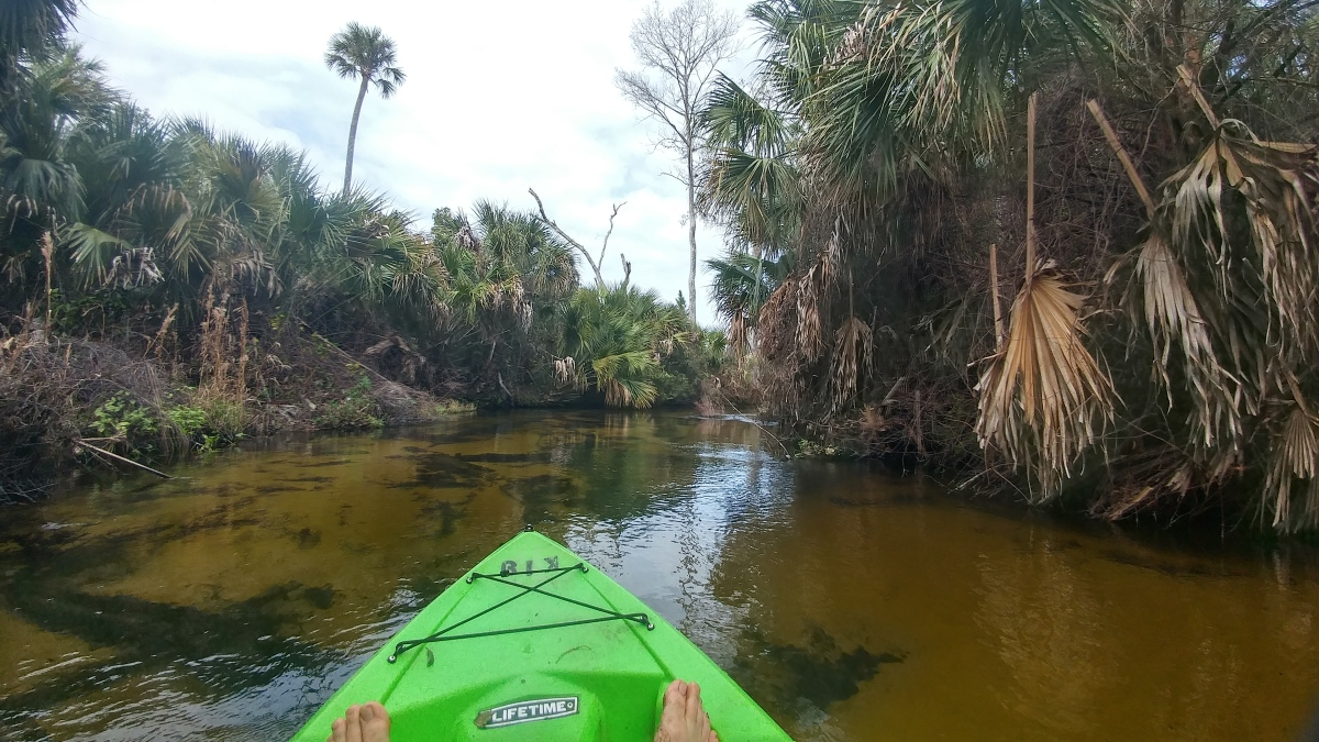 Chasing Memory in Florida's Juniper Creek